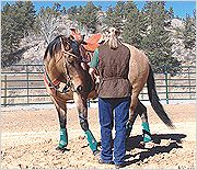 10 Minute Horse Training